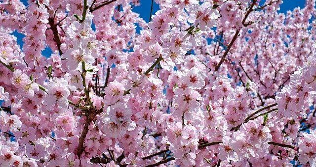 Primeros árboles en flor, primeras alergias