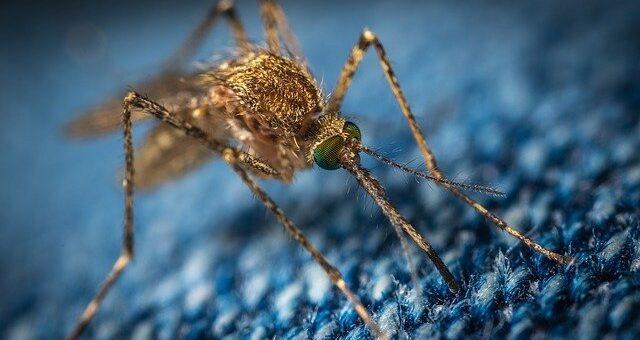 Picaduras de insectos y arañas